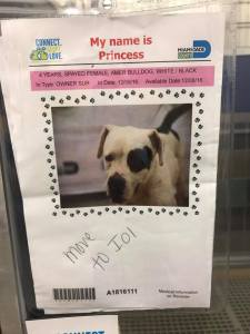princess-kennel-card