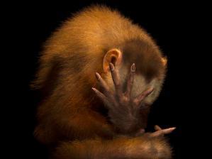 Summit Municipal Park Wedge-capped capuchin