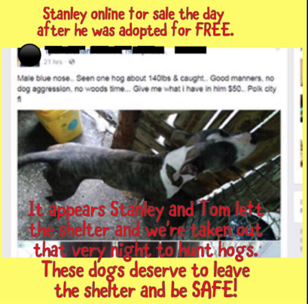 Stanley posted for sale the day after his adoption