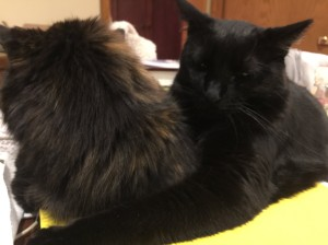 Blacky and Sally