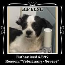 RIP Benji