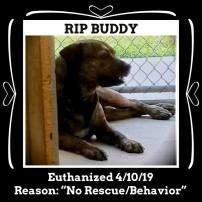 RIP BUddy