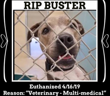 RIP Buster