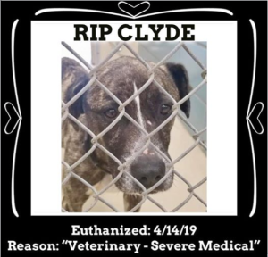 RIP Clyde