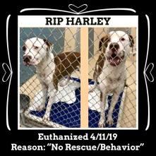 RIP Harley