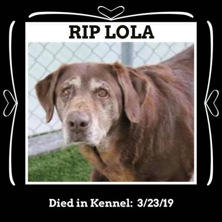 RIP lola