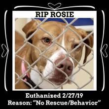 RIP Rosie