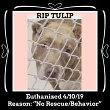 RIP Tulip